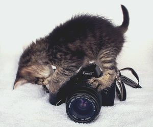 cat, cute, and camera image