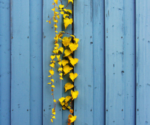 yellow, blue, and flowers image