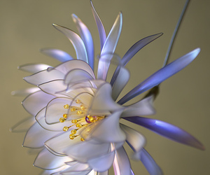 beautiful, flowers, and hair ornaments image