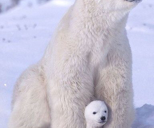 Polar Bear, animal, and bear image