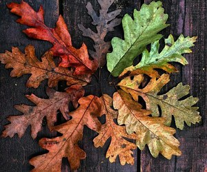 aged, colors, and fall image