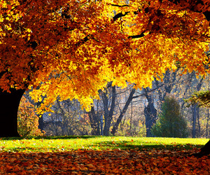 beautiful, leaves, and tree image