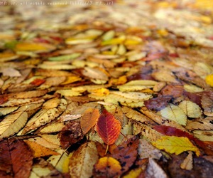 beautiful, leaves, and nature image