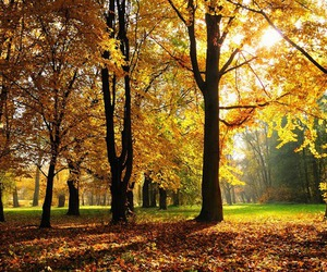 leaves, trees, and yellow image