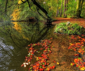 beautiful, leaves, and trees image