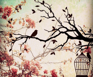 background, birds, and cage image