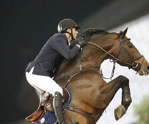 beleza, cavalo, and horse image