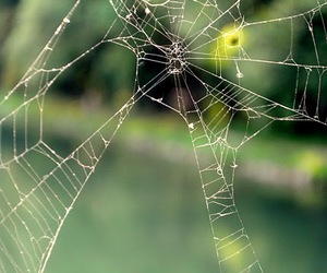 green, spider, and summer image