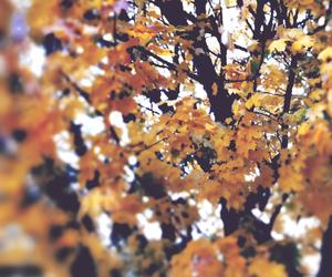 arts, autumn, and beautiful image