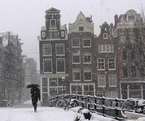snow, amsterdam, and winter image