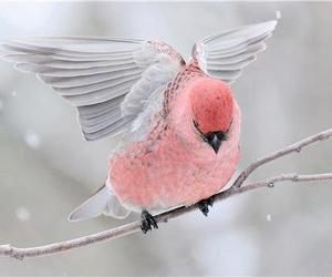 bird, pink, and snow image