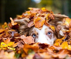 cute dogs, puppies, and leaves image