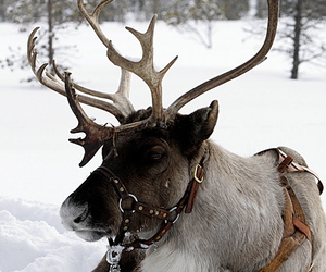 snow, winter, and reindeer image