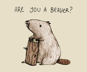 beaver, funny, and cute image