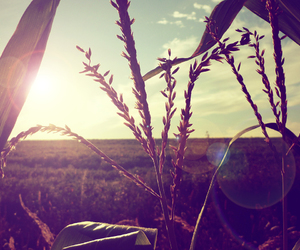 nature, sun, and vintage image