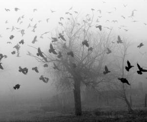 bird, tree, and black and white image