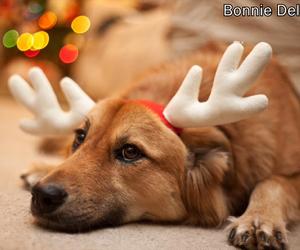 adorable, animal, and christmas image