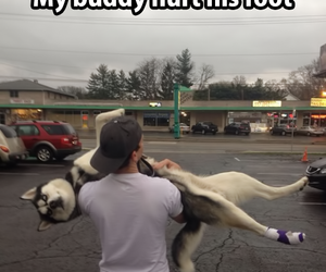 dog, best friends, and husky image