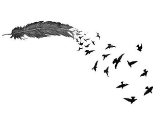 feather, bird, and tumblr image