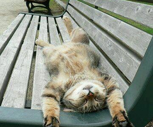 cat, animal, and relax image