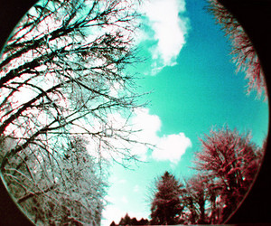 fisheye and nature image