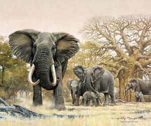 africa, baobab, and elephant. elefante image