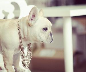 dog, french bulldog, and cute image