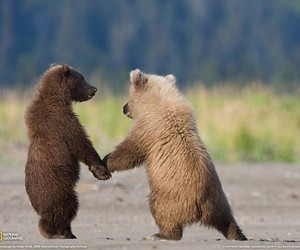 holding hands, baby bears, and cute image