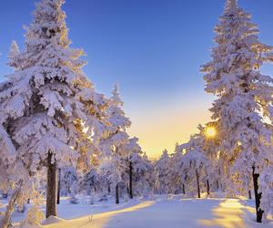 snow, winter, and tree image