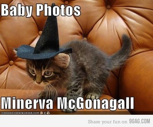 harry potter, mcgonagall, and cat image