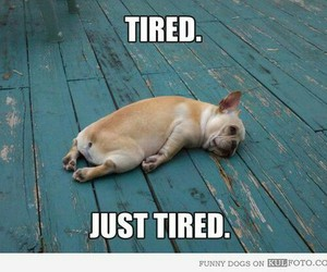 tired, funny, and dog image