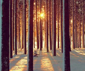 snow, tree, and beautiful image