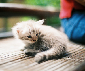 adorable, pet, and cute image