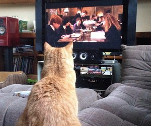 harry potter, orange cat, and watching image