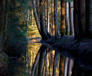 forest, photography, and germany image