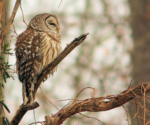 branch, owl, and tree image