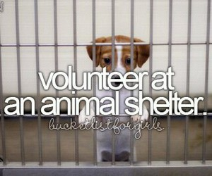 volunteer, animal, and animal shelter image