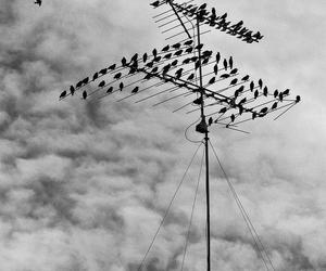 antenna, birds, and monochrome image