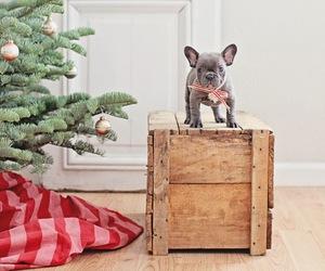 christmas and frenchie image