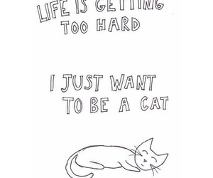 cat, quote, and life image