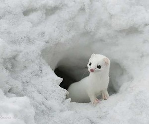 snow, cute, and animal image