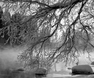 christmas, frozen, and nature image