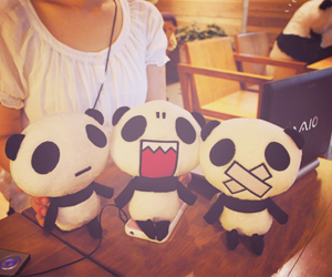 panda, photo, and stuff image