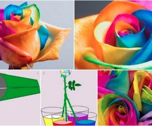 amazing, colorful, and rainbow image