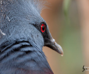 bird and red eye image