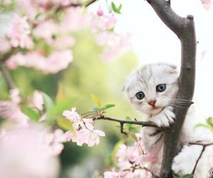 flowers, kitten, and tree image
