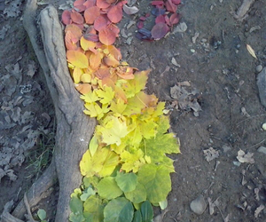 art, autumn, and cold image
