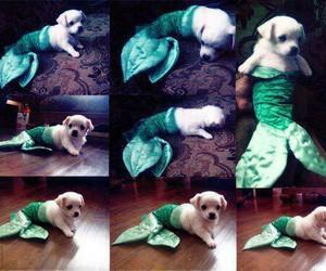 dog, cute, and mermaid image