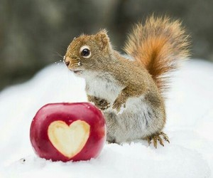 heart, red apple, and snow image