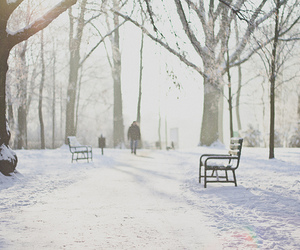 winter, snow, and trees image